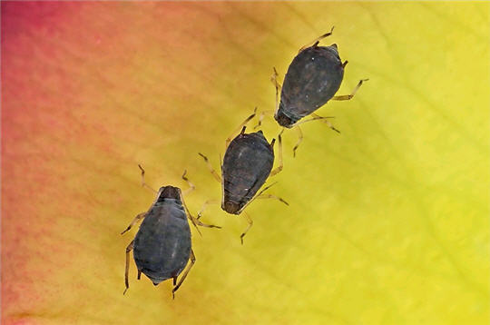 Les parasites - Parasites du bois maison ...